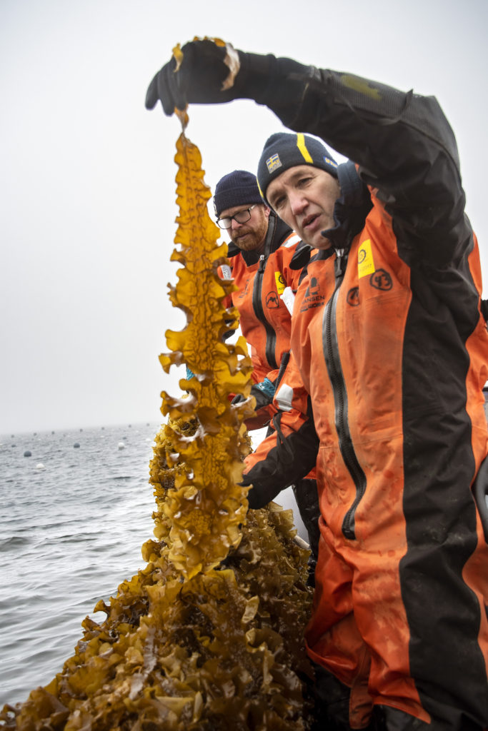 Dream of putting more seaweed on our plates | Mistra